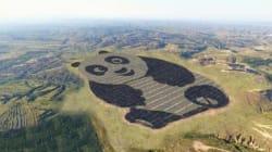 La stazione solare ideata dai cinesi è a forma di panda per una precisa