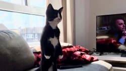 世界中のネコが起ち上がった。胸を張って、二本足で堂々と(画像)