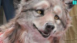 Peta manifeste devant le BHV pour dénoncer la cruauté de Canada