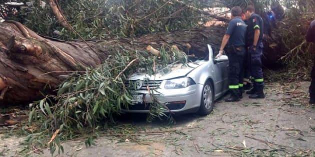 Las víctimas se dirigían a su casa cuando el eucalipto se desplomó, luego de desprenderse desde su raíz.