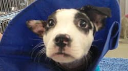 Puppy Reunites With Firefighters Who Pulled Her From Burning