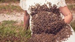 Cette mère enceinte pose avec 20.000 abeilles sur le