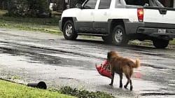 Ce chien est aussi en mode survie pendant l'ouragan