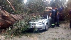 Familia muere aplastada por un árbol en