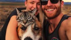 Un chat et un chien de sauvetage forment un adorable duo