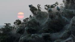 ギリシャの湖畔が、大量のクモの巣で真っ白になる。いったい何が起こったのか?(画像集)