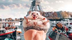 Mr.Pokee, l'adorable hérisson star d'Instagram, est
