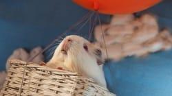 Ces photos montrent la nouvelle vie d'animaux de
