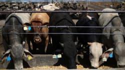 Exportadores de carne de México buscan mercados musulmanes como alternativa a