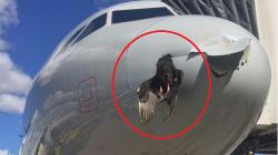 Cet oiseau est resté coincé dans l'avion qu'il a