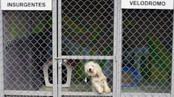 FOTOS: Así viven los perros que fueron rescatados en el