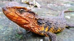 Conoce a las 115 nuevas especies descubiertas en