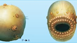 Notre plus vieil ancêtre avait une énorme bouche et pas