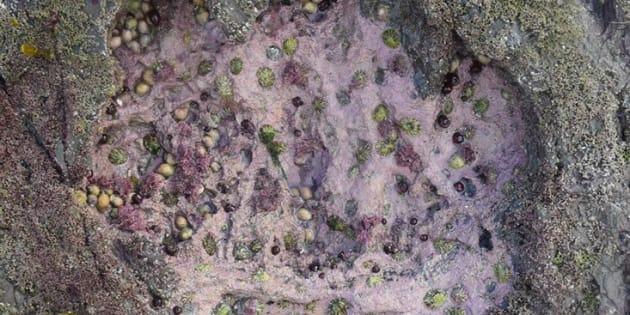 GB: des empreintes de dinosaures découvertes sur une île écossaise