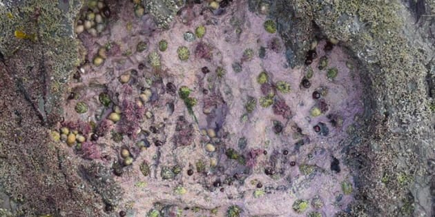 Une dizaine d'empreintes de sauropodes ont été découvertes sur l'îlede Skye.