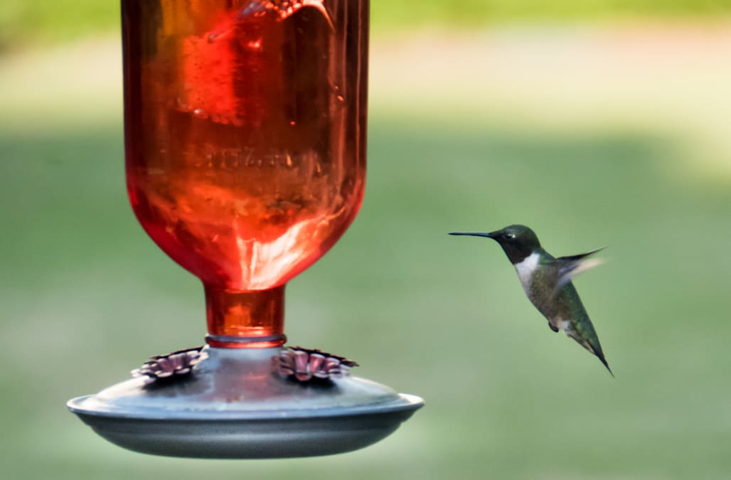 An easy hummingbird food recipe for bringing more to your garden