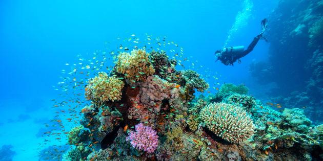 Conheça 5 destinos para fazer mergulho.