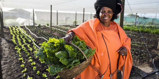 African Xhosa woman holding up beetroot she has harvested from her garden.