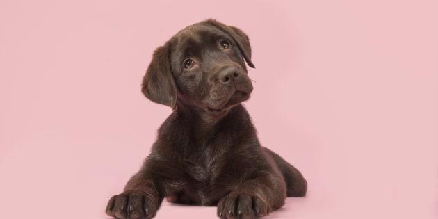 Tu perro te conoce mejor que nadie y estas nueve claves lo demuestran