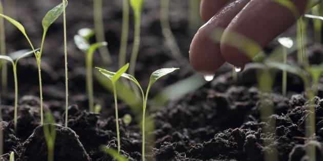 La permaculture, ça n'est pas que du jardinage.