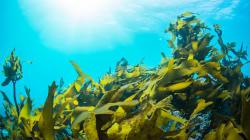 Tous les bienfaits des algues pour la