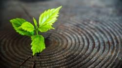 5 chefs de file mondiaux des énergies vertes et de la valorisation des