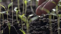BLOG - La permaculture, ça n'est pas que du