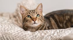 U.S. Embassy In Australia Apologizes For Cat Pajama Party