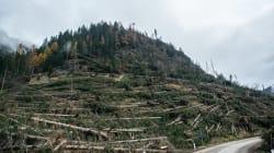 Nuova vita per gli arbusti distrutti dal maltempo nel Nord-Est: diventeranno alberi di