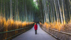La forêt de bambous de Kyoto est un vrai