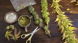 5 argumentos a favor (e 5 contra) da legalização da maconha no