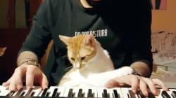 El esperanzador vídeo de Fevzi, el gato que logró volver a andar tras recibir una