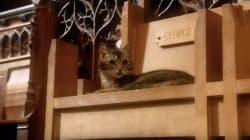 Este gato será inmortalizado en una escultura dentro de una catedral en