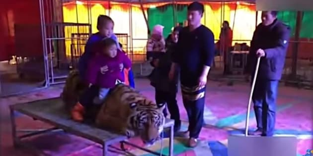 Des enfants prennent la pose sur le tigre.