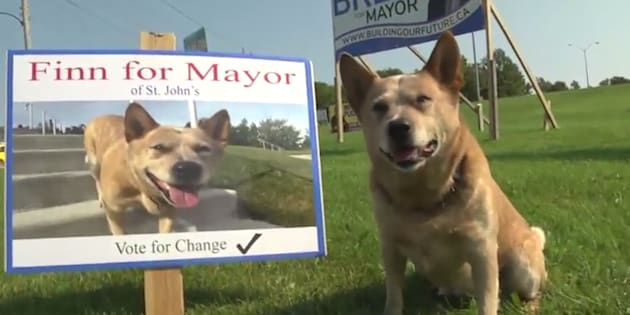 Finn, a five-year-old Australian cattle dog, is featured in a tongue-in-cheek, campaign-style YouTube video that has been making the rounds on social media.