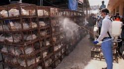 Poultry Association, Government Meet Over Bird