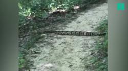 En pleine randonnée, ces promeneurs ont croisé un serpent très très (très)