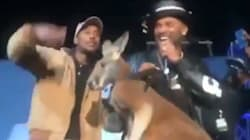 American Comedian Brought a Kangaroo On Stage, To The Horror Of