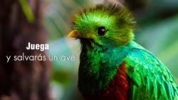 Flying Free, el videojuego para móviles quecuidaespecies en peligro de
