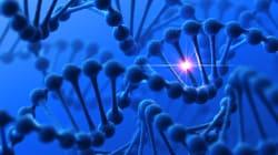 Des gènes défectueux corrigés dans des embryons humains pour la première
