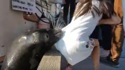 Ce lion de mer a surpris tout le monde en entraînant une fillette sous