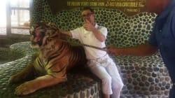 Turistas en Tailandia permiten este trato a tigres para su foto del