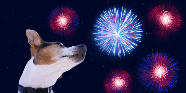 Que faire si votre chien a peur des feux d'artifice ce 14 juillet.