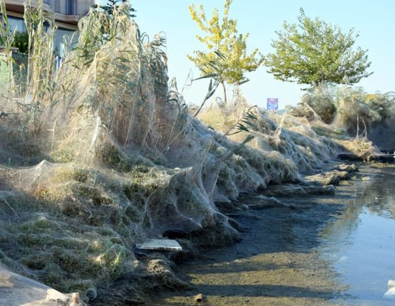 1,000 feet of spiderwebs blanket small town