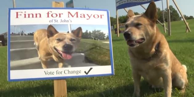 Finn, que já era famoso localmente, aparece em um vídeo no qual mostra que tem todos os requisitos para ser um bom prefeito canadense.