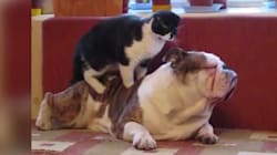 Watch These Jerky Cats Being Totally
