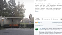 Lupo ucciso e appeso per le zampe alla fermata del bus a