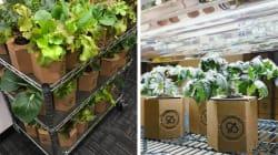 Sim, é possível ter uma horta em casa usando caixas de
