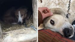 Videos Of 'Cruel' Conditions At Ont. Dog Sledding Operation Spark