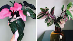 16 plantas com 'estampas' que vão deixar sua casa ainda mais